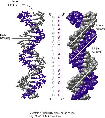dna_structure_lsd
